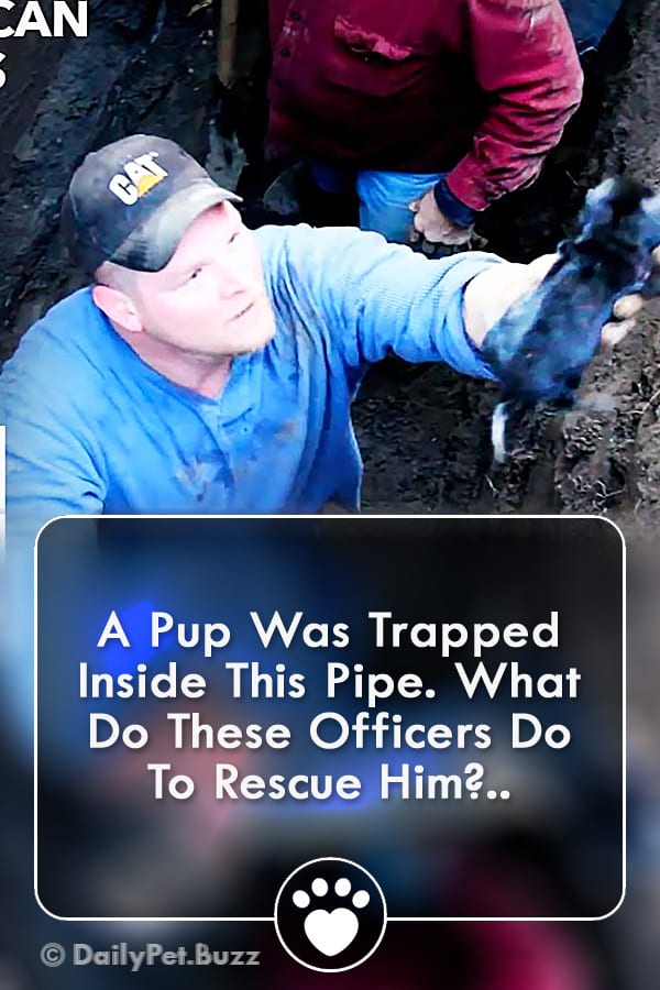 A Pup Was Trapped Inside This Pipe. What Do These Officers Do To Rescue Him?..