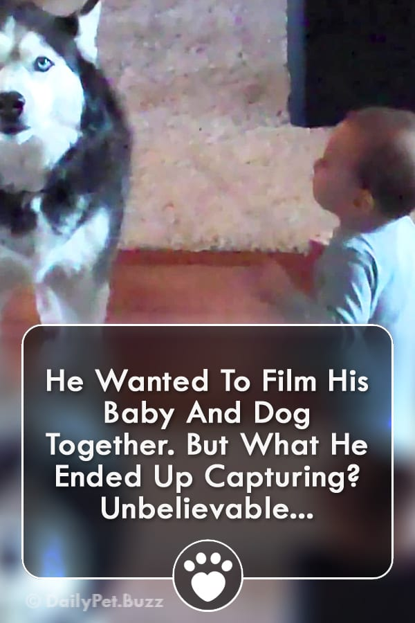 He Wanted To Film His Baby And Dog Together. But What He Ended Up Capturing? Unbelievable...
