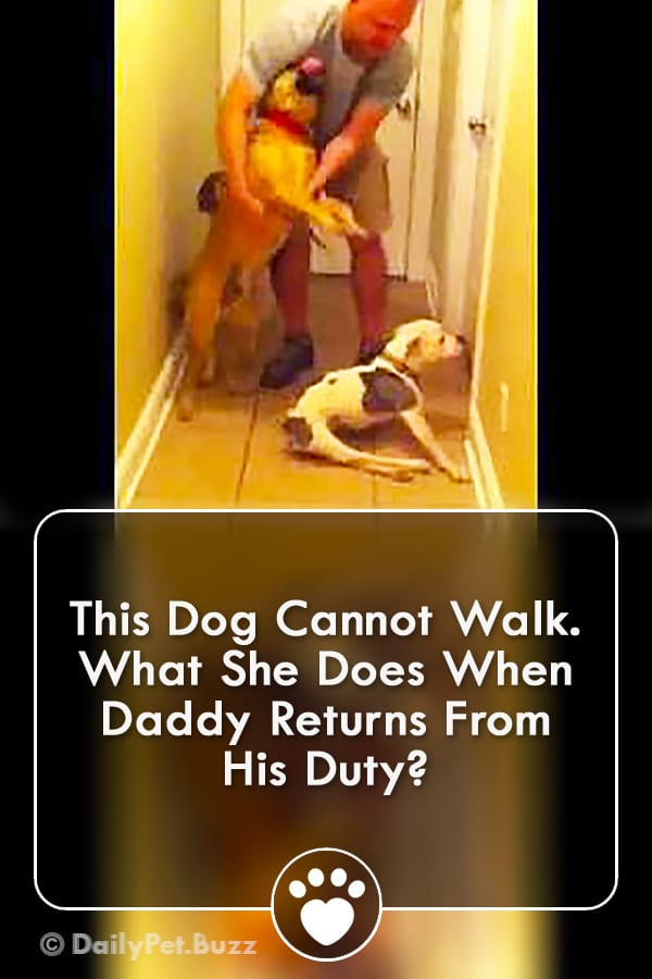 This Dog Cannot Walk. What She Does When Daddy Returns From His Duty?