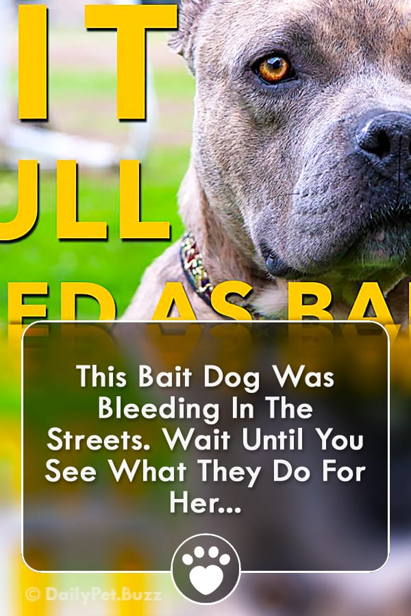This Bait Dog Was Bleeding In The Streets. Wait Until You See What They Do For Her...