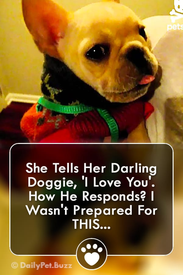 She Tells Her Darling Doggie, \'I Love You\'. How He Responds? I Wasn\'t Prepared For THIS...