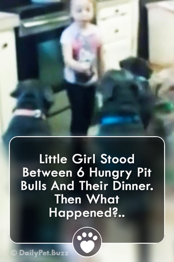 Little Girl Stood Between 6 Hungry Pit Bulls And Their Dinner. Then What Happened?..