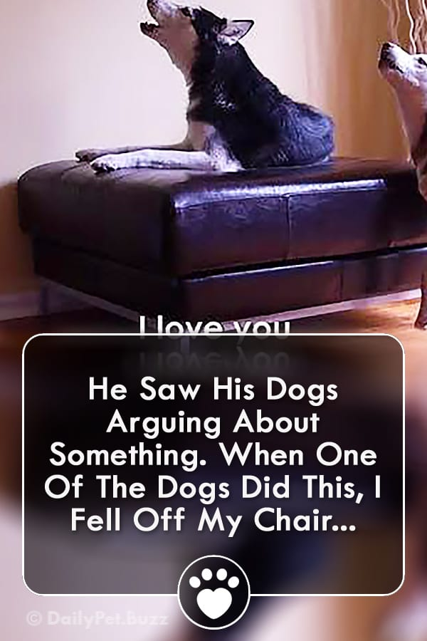 He Saw His Dogs Arguing About Something. When One Of The Dogs Did This, I Fell Off My Chair...