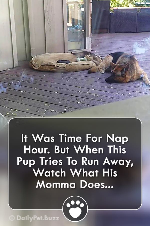 It Was Time For Nap Hour. But When This Pup Tries To Run Away, Watch What His Momma Does...