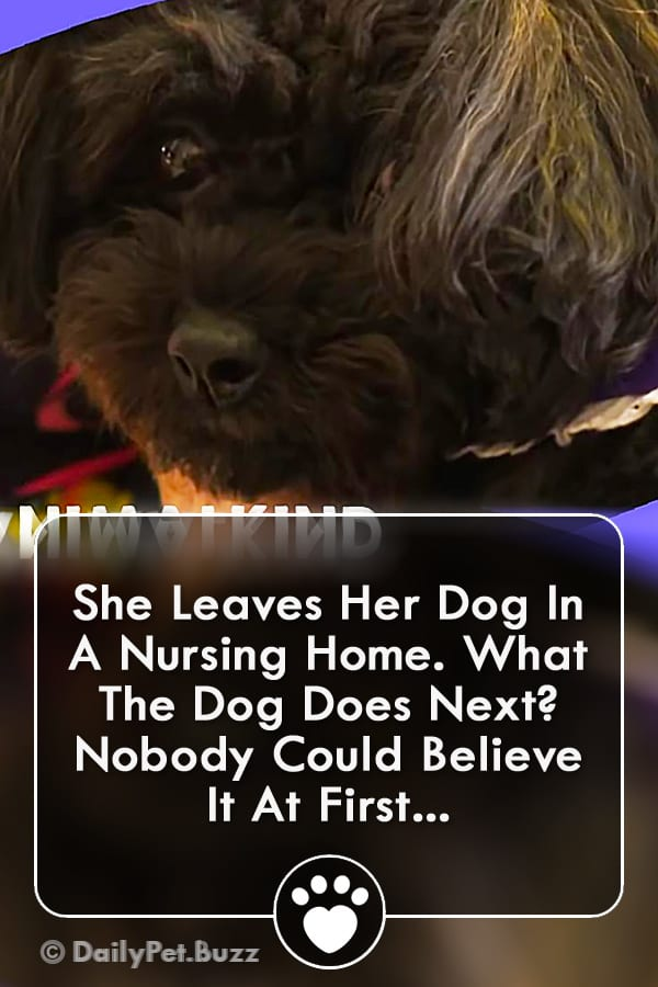 She Leaves Her Dog In A Nursing Home. What The Dog Does Next? Nobody Could Believe It At First...