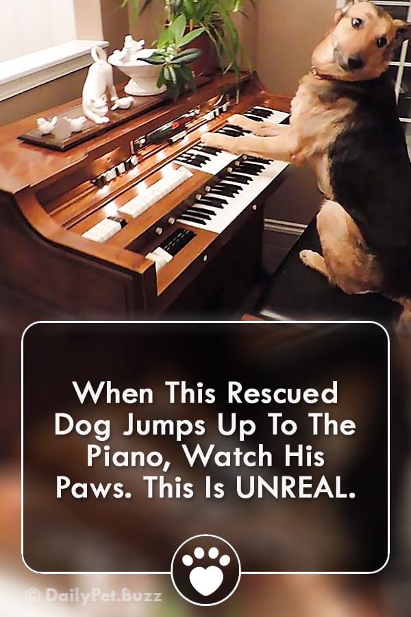 When This Rescued Dog Jumps Up To The Piano, Watch His Paws. This Is UNREAL.