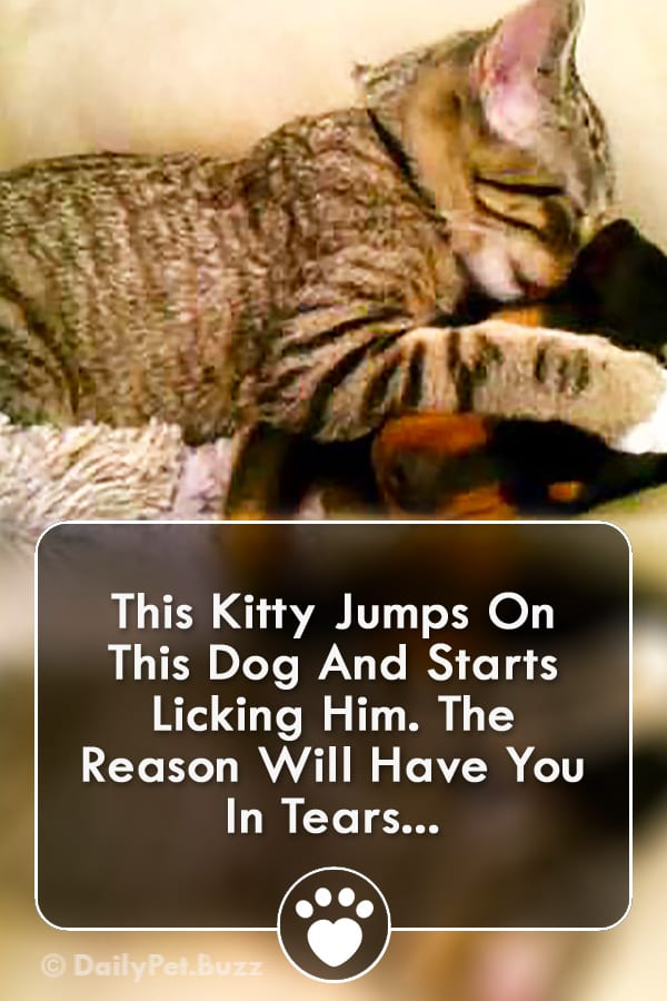 This Kitty Jumps On This Dog And Starts Licking Him. The Reason Will Have You In Tears...