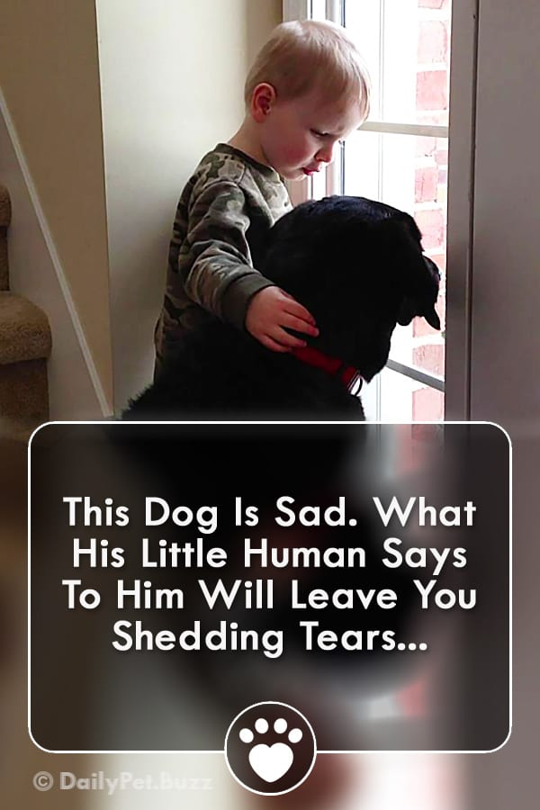 This Dog Is Sad. What His Little Human Says To Him Will Leave You Shedding Tears...