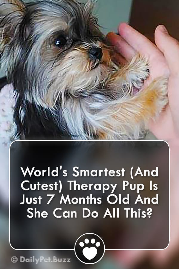 World\'s Smartest (And Cutest) Therapy Pup Is Just 7 Months Old And She Can Do All This?