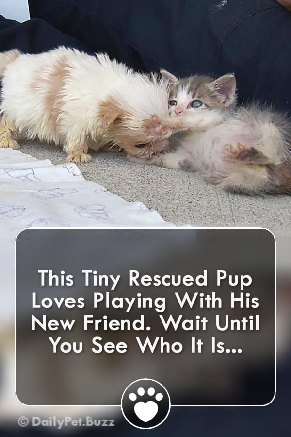 This Tiny Rescued Pup Loves Playing With His New Friend. Wait Until You See Who It Is...