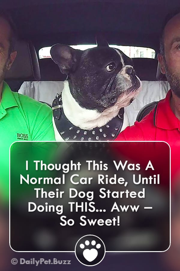 I Thought This Was A Normal Car Ride, Until Their Dog Started Doing THIS... Aww – So Sweet!