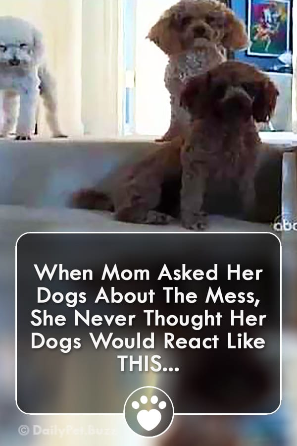 When Mom Asked Her Dogs About The Mess, She Never Thought Her Dogs Would React Like THIS...