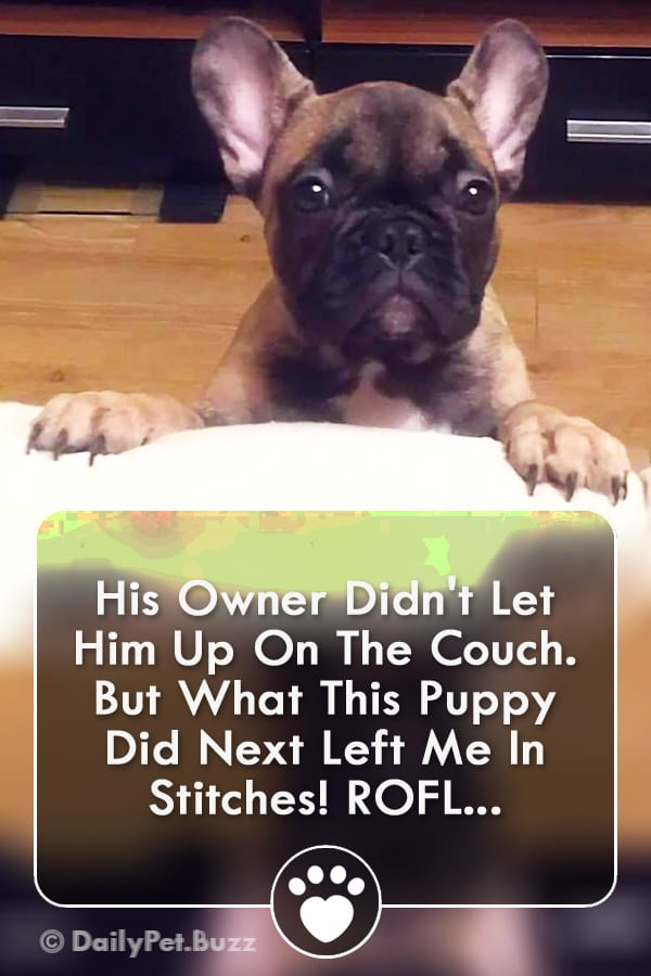 His Owner Didn\'t Let Him Up On The Couch. But What This Puppy Did Next Left Me In Stitches! ROFL...