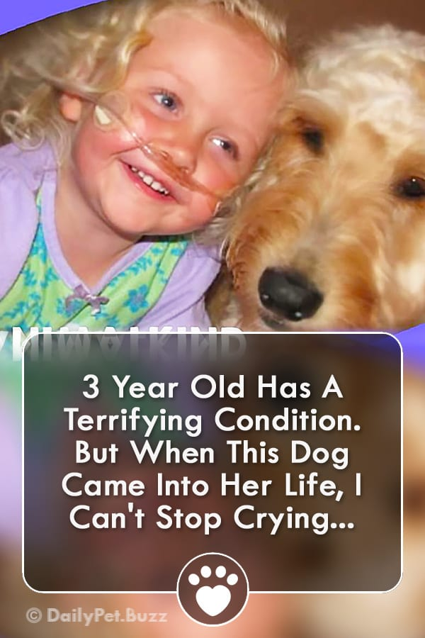 3 Year Old Has A Terrifying Condition. But When This Dog Came Into Her Life, I Can\'t Stop Crying...