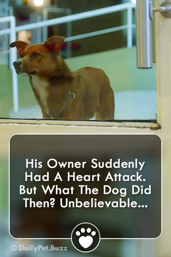 His Owner Suddenly Had A Heart Attack. But What The Dog Did Then? Unbelievable...