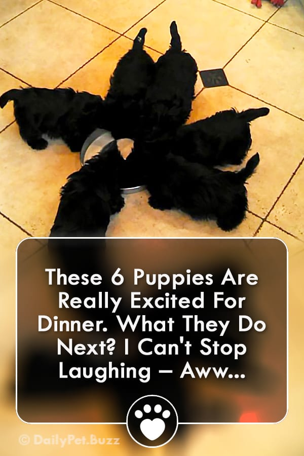 These 6 Puppies Are Really Excited For Dinner. What They Do Next? I Can\'t Stop Laughing – Aww...