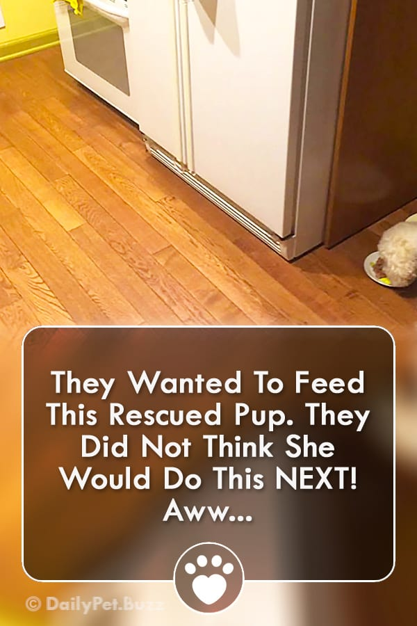 They Wanted To Feed This Rescued Pup. They Did Not Think She Would Do This NEXT! Aww...