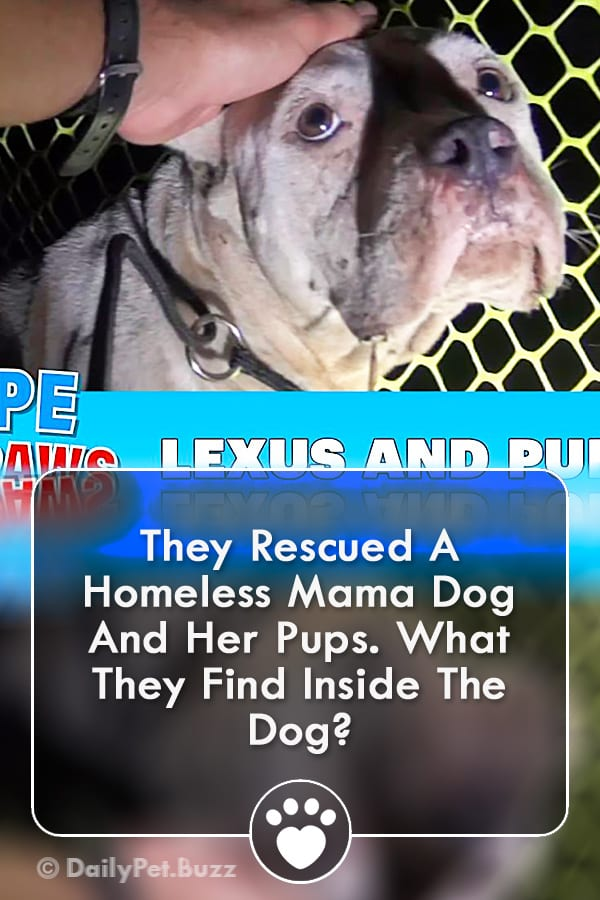 They Rescued A Homeless Mama Dog And Her Pups. What They Find Inside The Dog?