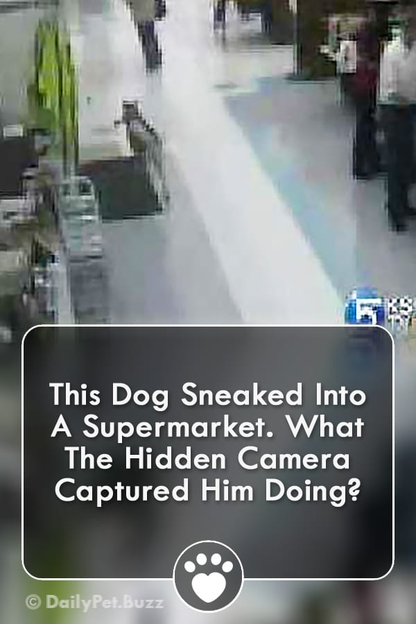 This Dog Sneaked Into A Supermarket. What The Hidden Camera Captured Him Doing?
