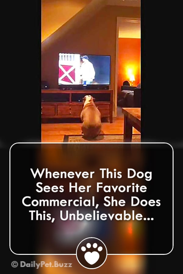Whenever This Dog Sees Her Favorite Commercial, She Does This, Unbelievable...