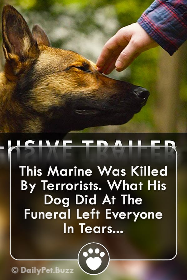 This Marine Was Killed By Terrorists. What His Dog Did At The Funeral Left Everyone In Tears...