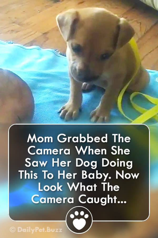 Mom Grabbed The Camera When She Saw Her Dog Doing This To Her Baby. Now Look What The Camera Caught...