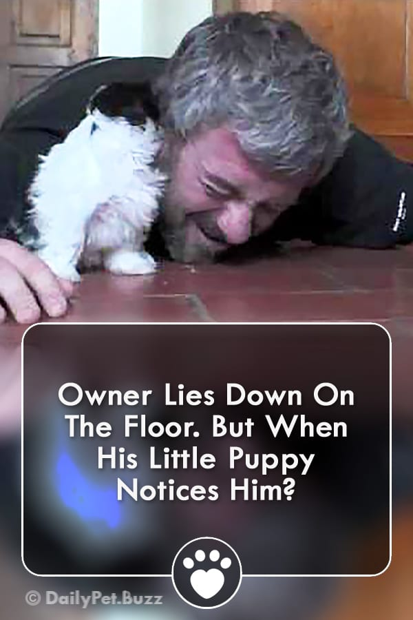 Owner Lies Down On The Floor. But When His Little Puppy Notices Him?