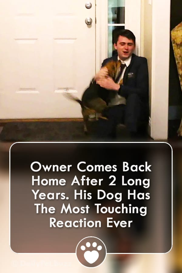 Owner Comes Back Home After 2 Long Years. His Dog Has The Most Touching Reaction Ever