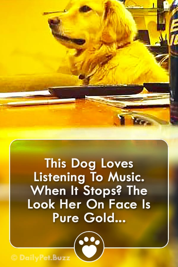 This Dog Loves Listening To Music. When It Stops? The Look Her On Face Is Pure Gold...