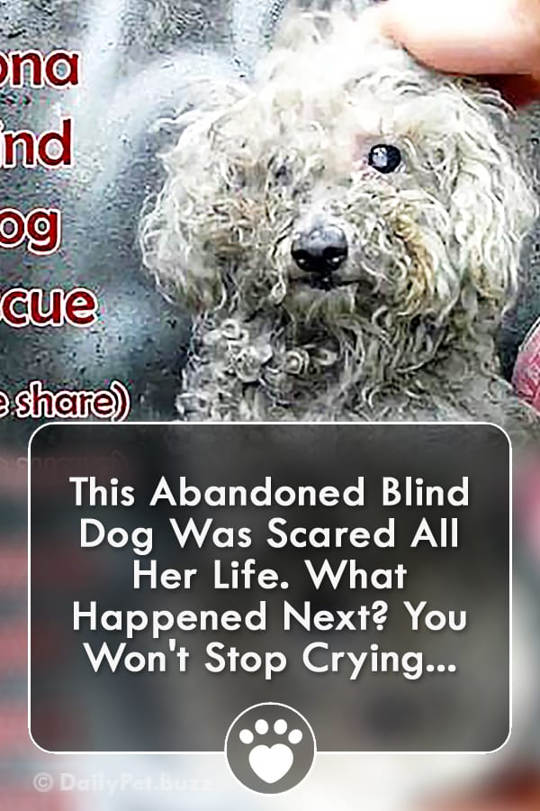 This Abandoned Blind Dog Was Scared All Her Life. What Happened Next? You Won\'t Stop Crying...
