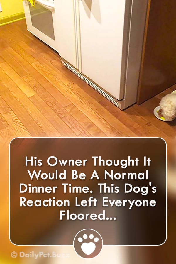 His Owner Thought It Would Be A Normal Dinner Time. This Dog\'s Reaction Left Everyone Floored!