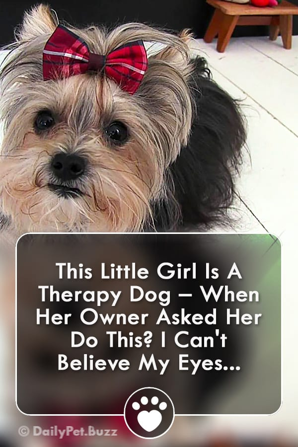 This Little Girl Is A Therapy Dog – When Her Owner Asked Her Do This? I Can\'t Believe My Eyes...