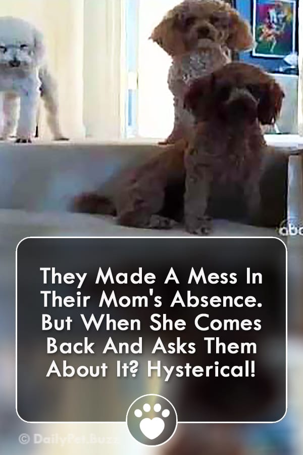 They Made A Mess In Their Mom\'s Absence. But When She Comes Back And Asks Them About It? Hysterical!