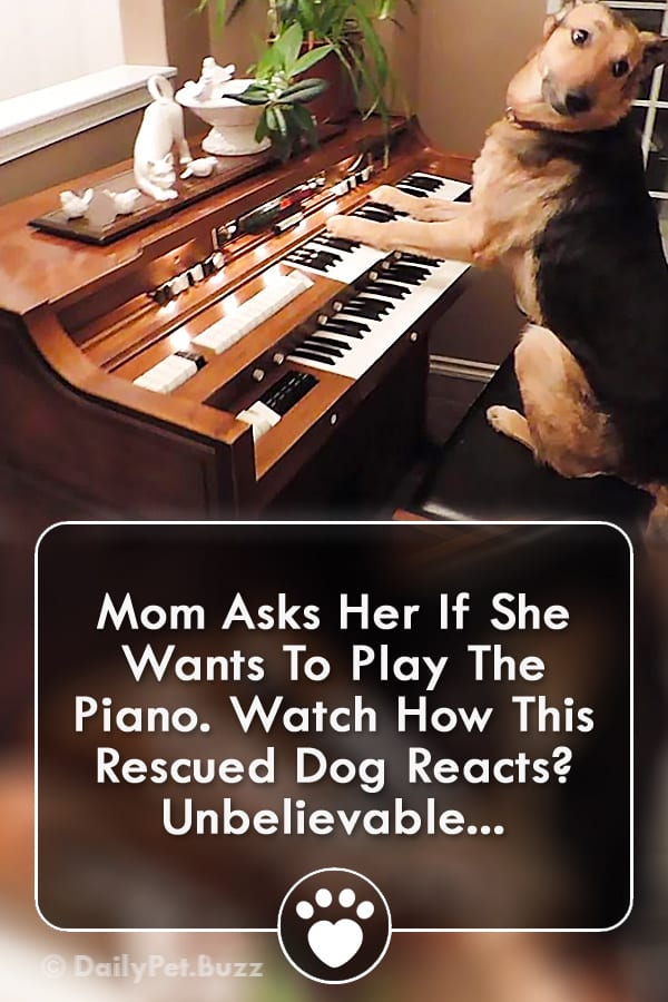 Mom Asks Her If She Wants To Play The Piano. Watch How This Rescued Dog Reacts? Unbelievable...