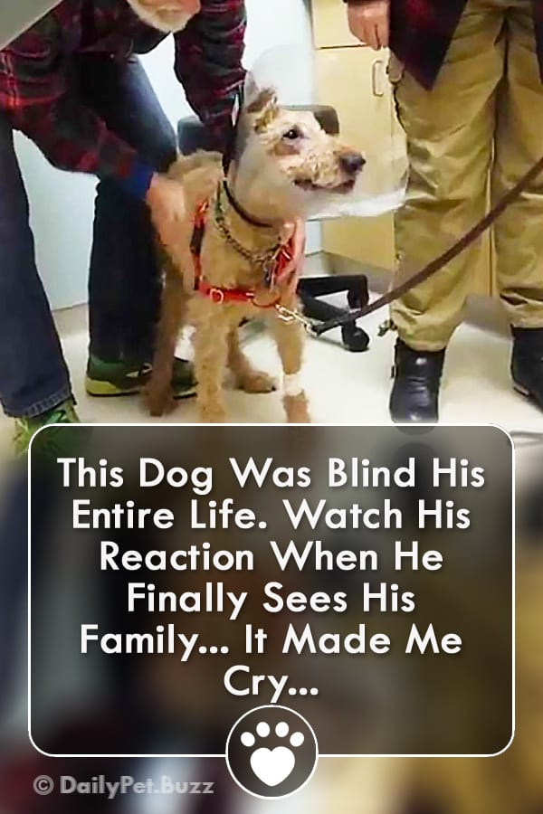 This Dog Was Blind His Entire Life. Watch His Reaction When He Finally Sees His Family... It Made Me Cry...