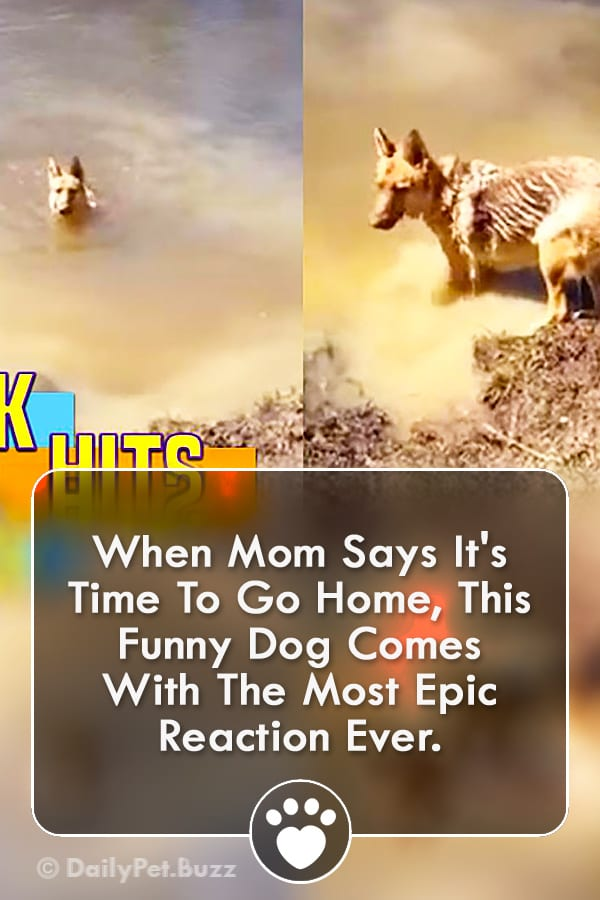 When Mom Says It\'s Time To Go Home, This Funny Dog Comes With The Most Epic Reaction Ever.