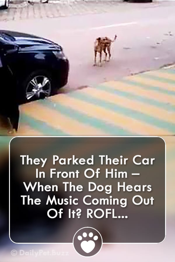 They Parked Their Car In Front Of Him – When The Dog Hears The Music Coming Out Of It? ROFL...