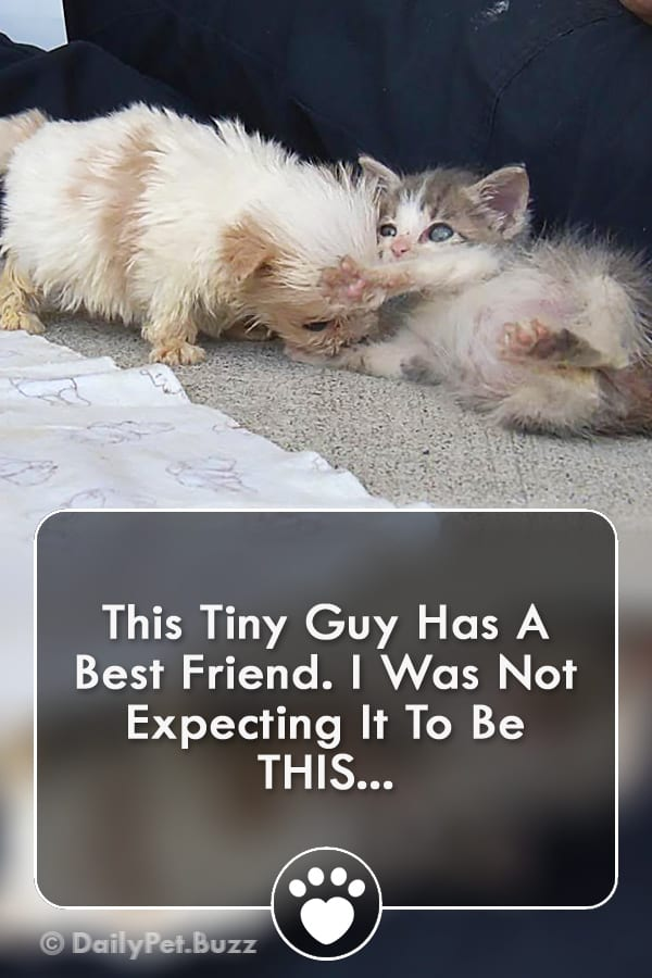 This Tiny Guy Has A Best Friend. I Was Not Expecting It To Be THIS...