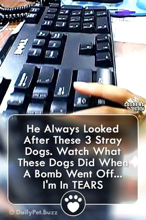 He Always Looked After These 3 Stray Dogs. Watch What These Dogs Did When A Bomb Went Off... I\'m In TEARS