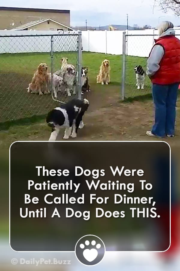 These Dogs Were Patiently Waiting To Be Called For Dinner, Until A Dog Does THIS.