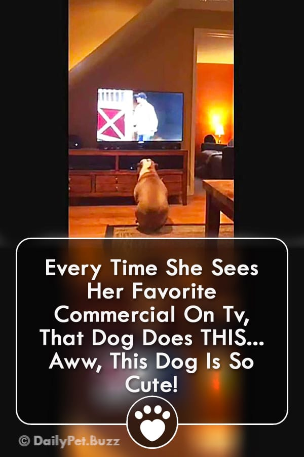 Every Time She Sees Her Favorite Commercial On Tv, That Dog Does THIS... Aww, This Dog Is So Cute!