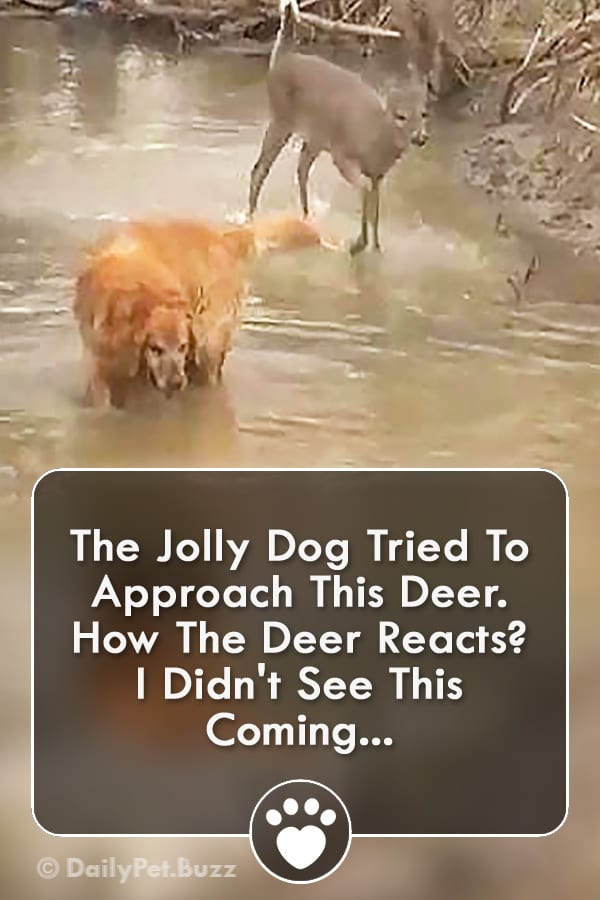 The Jolly Dog Tried To Approach This Deer. How The Deer Reacts? I Didn\'t See This Coming...