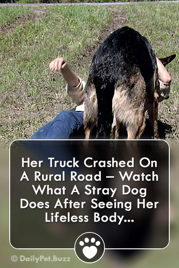 Her Truck Crashed On A Rural Road – Watch What A Stray Dog Does After Seeing Her Lifeless Body...