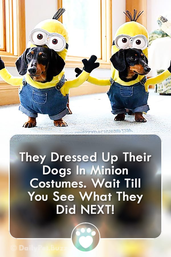 They Dressed Up Their Dogs In Minion Costumes. Wait Till You See What They Did NEXT!