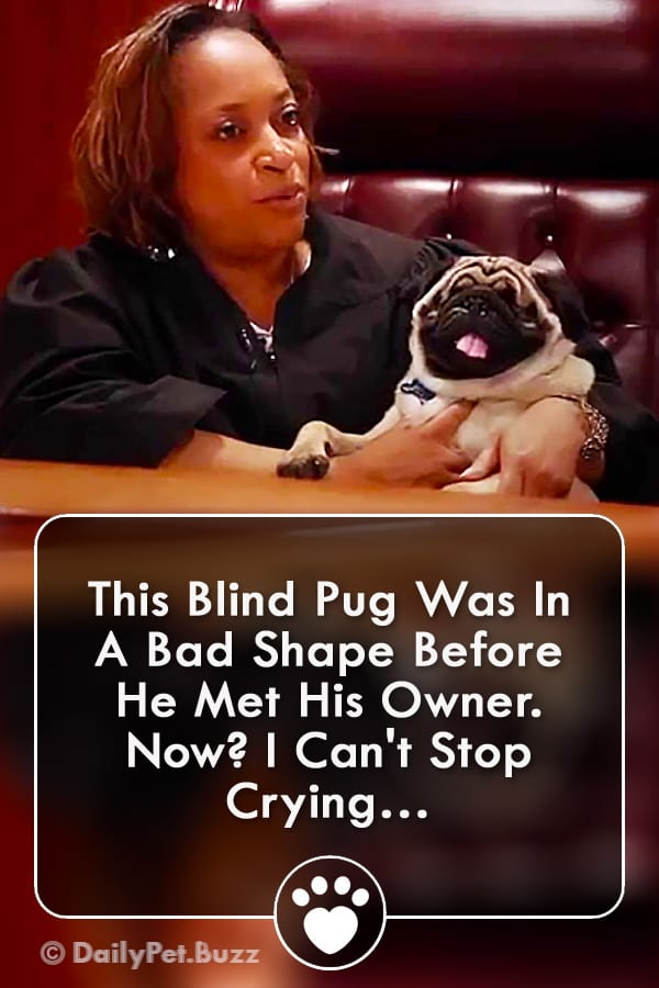 This Blind Pug Was In A Bad Shape Before He Met His Owner. Now? I Can\'t Stop Crying…
