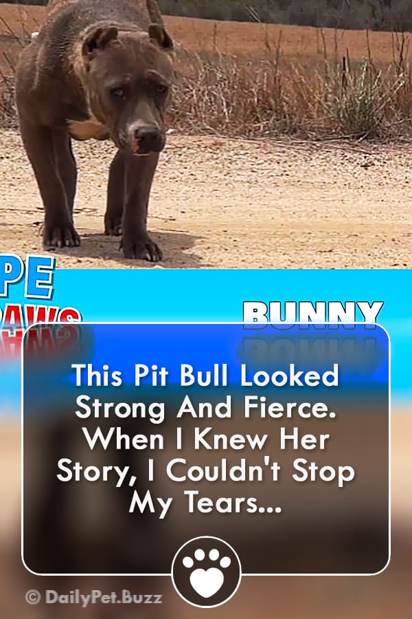 This Pit Bull Looked Strong And Fierce. When I Knew Her Story, I Couldn\'t Stop My Tears...