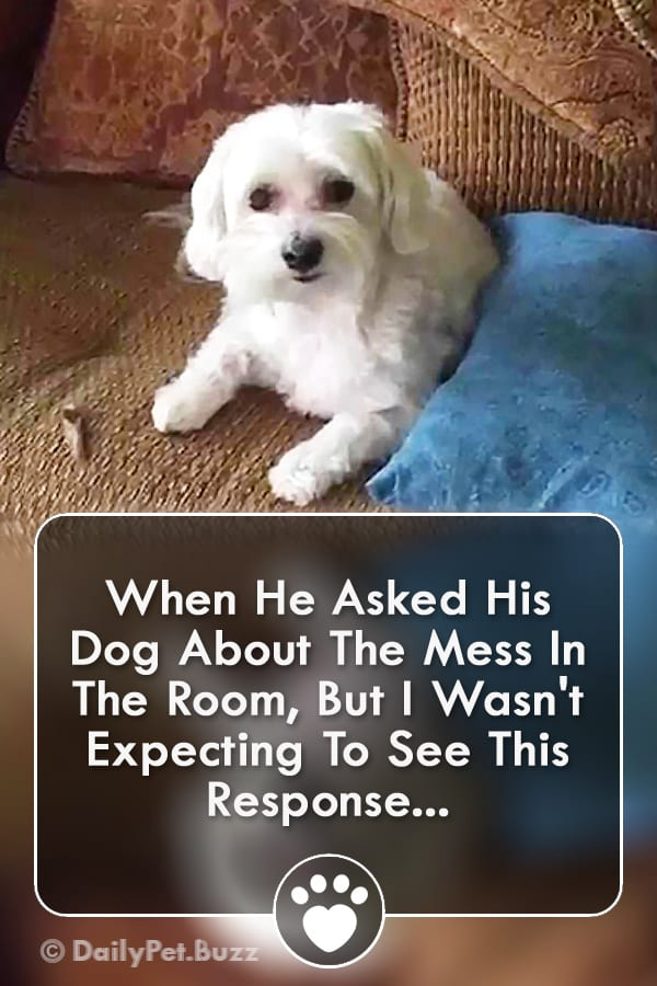 When He Asked His Dog About The Mess In The Room, But I Wasn\'t Expecting To See This Response...