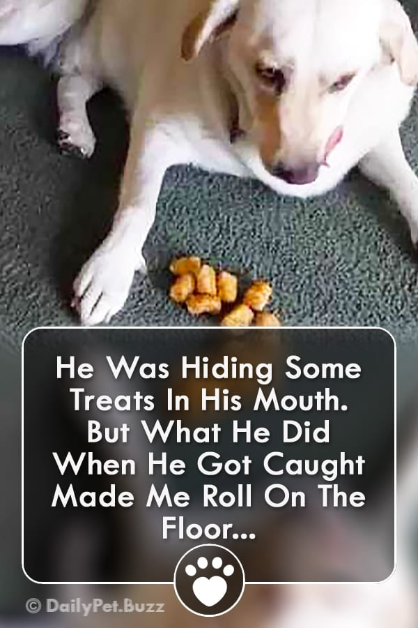 He Was Hiding Some Treats In His Mouth. But What He Did When He Got Caught Made Me Roll On The Floor...
