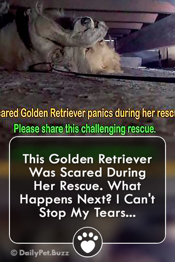 This Golden Retriever Was Scared During Her Rescue. What Happens Next? I Can\'t Stop My Tears...