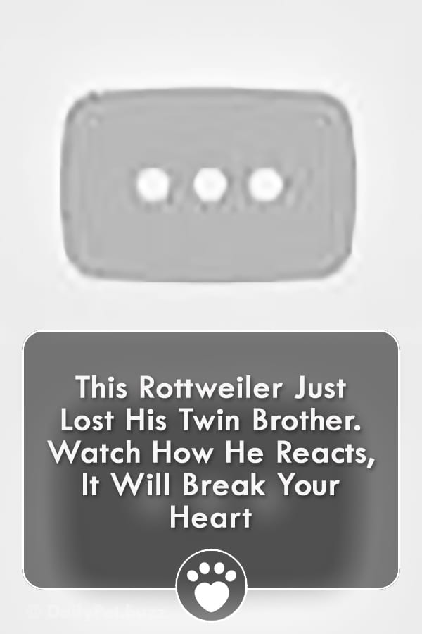 This Rottweiler Just Lost His Twin Brother. Watch How He Reacts, It Will Break Your Heart